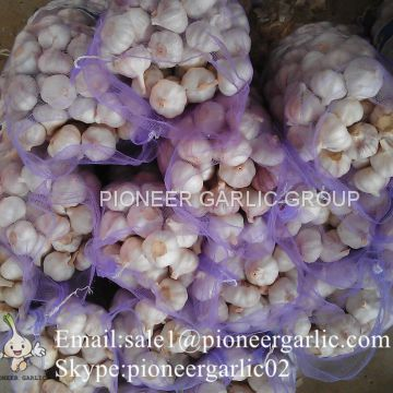 5.5cm Normal White Garlic Loose Packing In 10kg Mesh Bag
