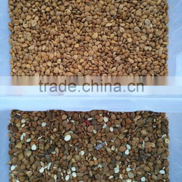 Stable quality almond color sorting machine in hefei anhui