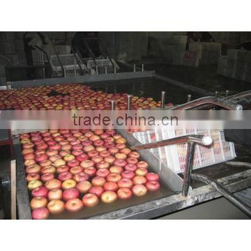onion sorting production line/weight grading machine