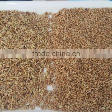 ZRWS high quality Xinjiang wheat color sorter with competitive price