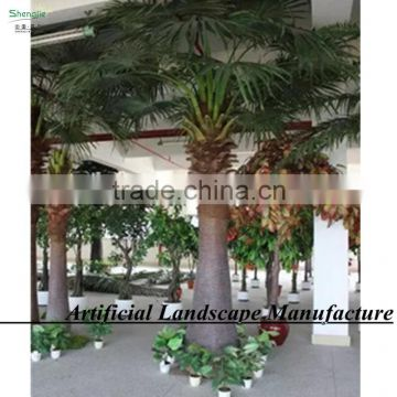 garden/landscaping/home decorative indoor palm trees