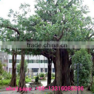 LXY081903 large outdoor artificial trees plastic banyan tree foliage plants cheap artificial tree