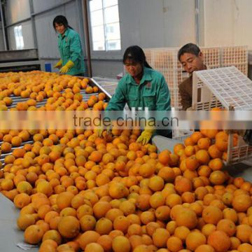 Lemon Grading Machine Sorter Grader