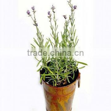 Lavender Pot, Rustic Long Pail, Copper Antique French Bucket