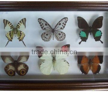 Wooden Frame With Real Butterfly