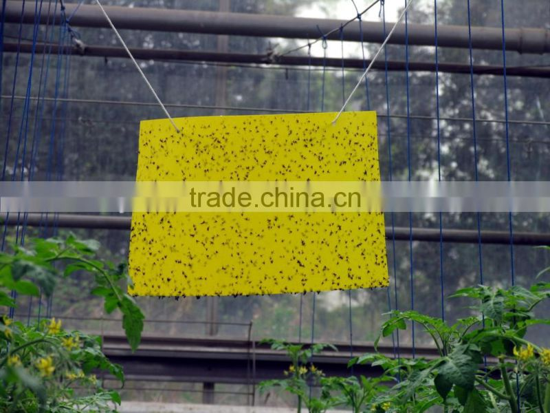 made in China glued board insect killer