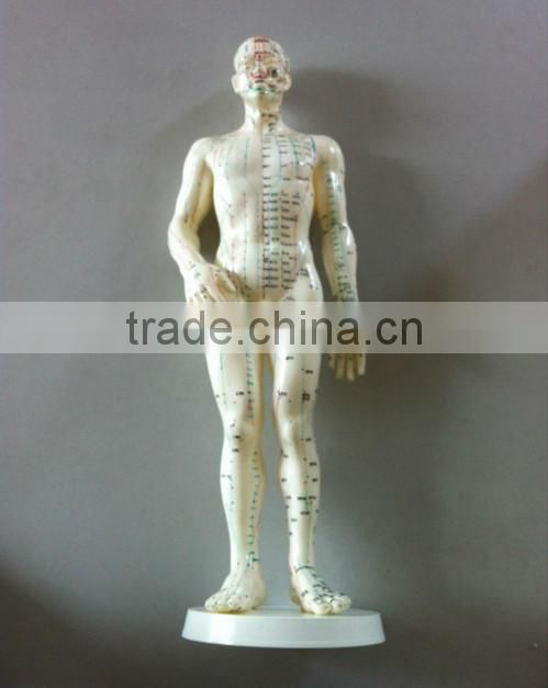 50cm acupuncture model - whole body model (50 cm)