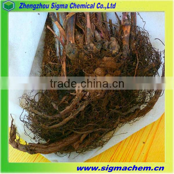 Chinese Herbal Medicine Aconitum Sinomontanum Nakai Root with good quality