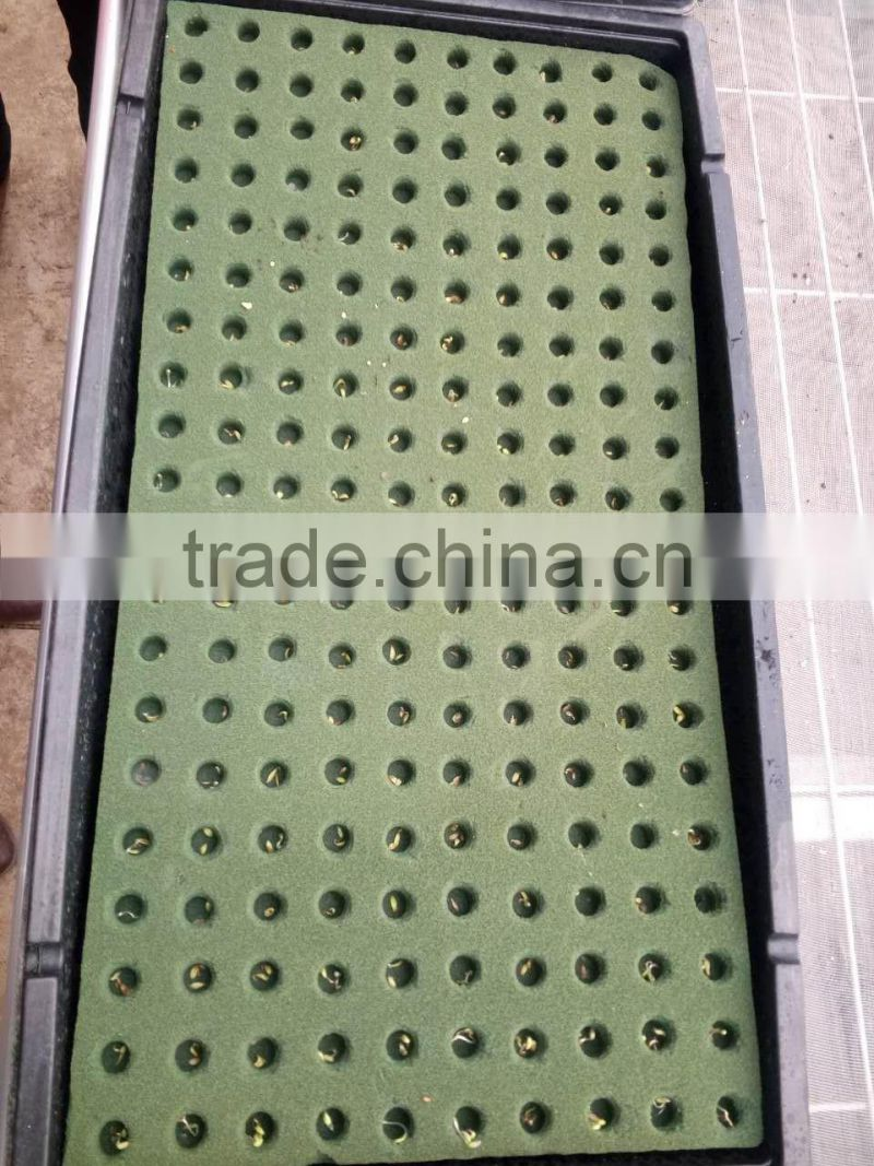 grow seeds planting phenolic resin soilless culture substrates