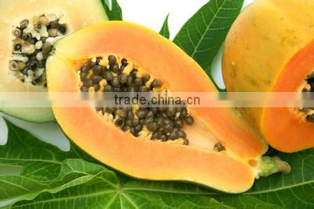 Papaya/pawpaw Multiple layer continuous type mesh belt dryer