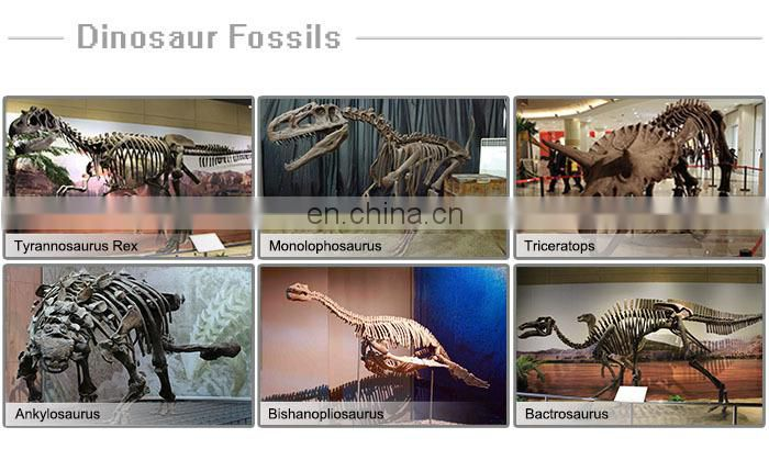 animal fossil skeleton for museum