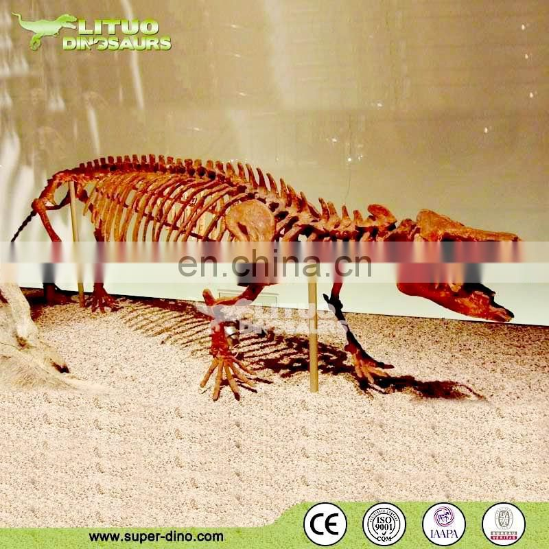 Museum Display Animal Skeleton Specimen