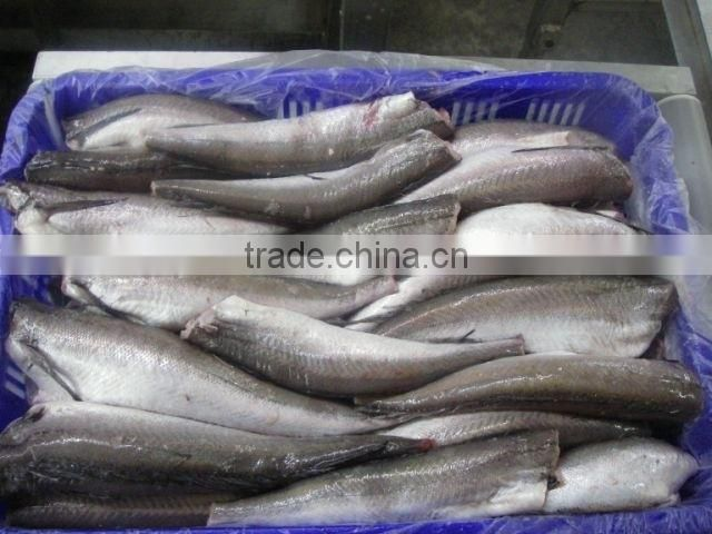Frozen canadian hake HGT sea fish exporter from china qingdao