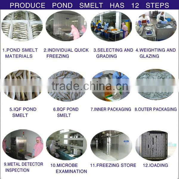 New coming frozen fish pond smelt