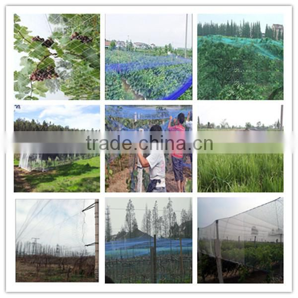 bird net for catching bird& nylon bird netting &plastic new hdpe anti bird net