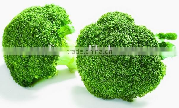 Lyphar Supply Best Broccoli Extract Sulforaphane,Natural Broccoli extract 1-98% Sulforaphane