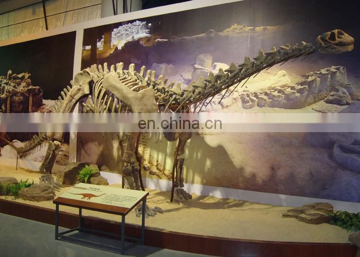 dinosaur skeleton exhibition for theme park