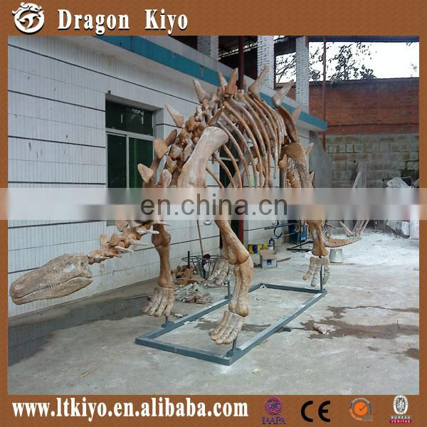 life size dinosaur fossil skeleton for sale for exhibition/park