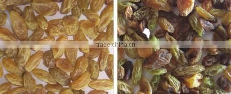 Excellent Quality engineer oversea service available raisins CCD Color Sorter