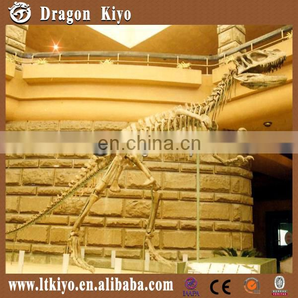 High Simulation Dinosaur Skeleton Replicas