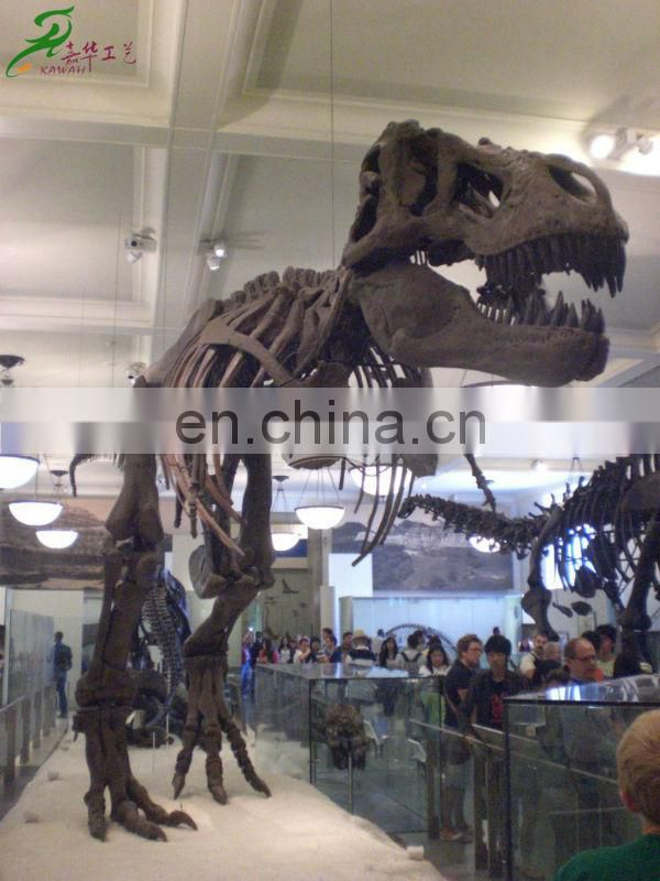 2013 kids indoor playgrounds museum quality resin dinosaur skeleton