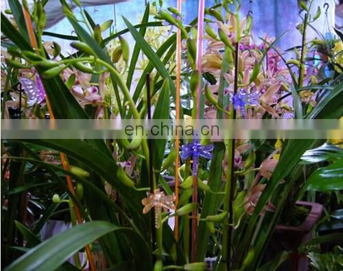 Plastic Stick For Planters Funny Design in Garden Ornament Orchid Acrylic Stick In Flower Pot