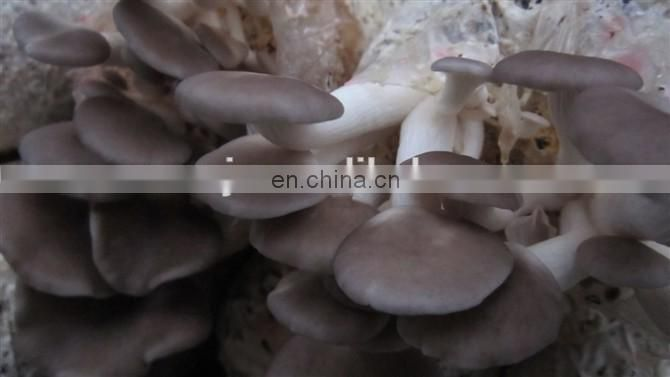 Small mushroom production line