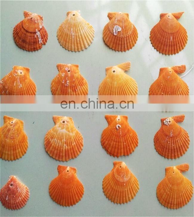Craft /& Decor Shell Natural Beach Mix Sea Shells 16 Medium SeaShells