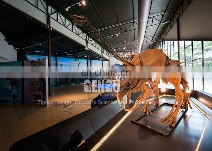museum quality dinosaur skeleton model