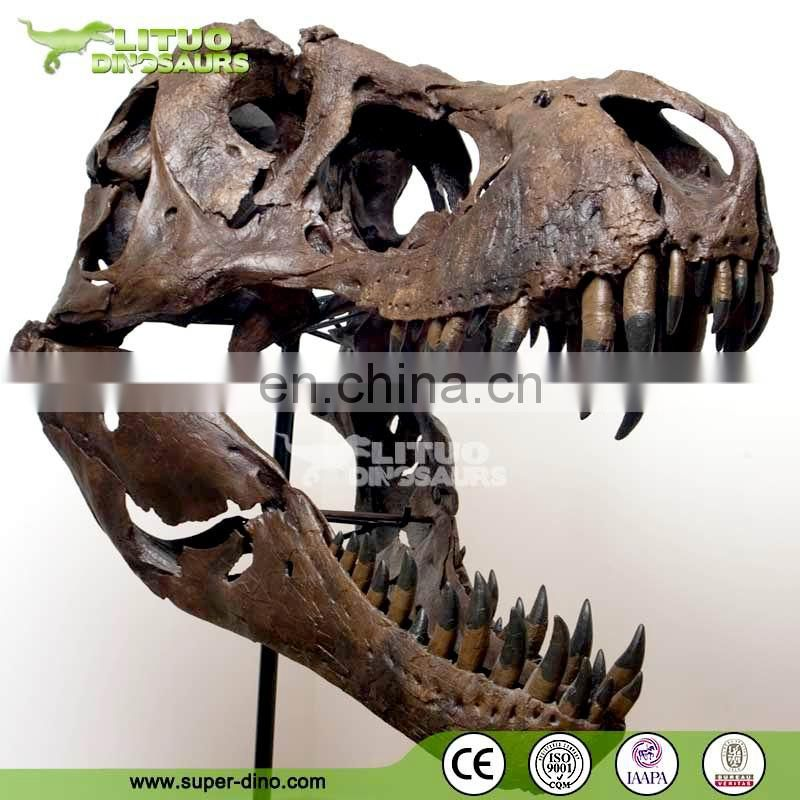 Trade Assurace High Simulation Museum T REX Skull