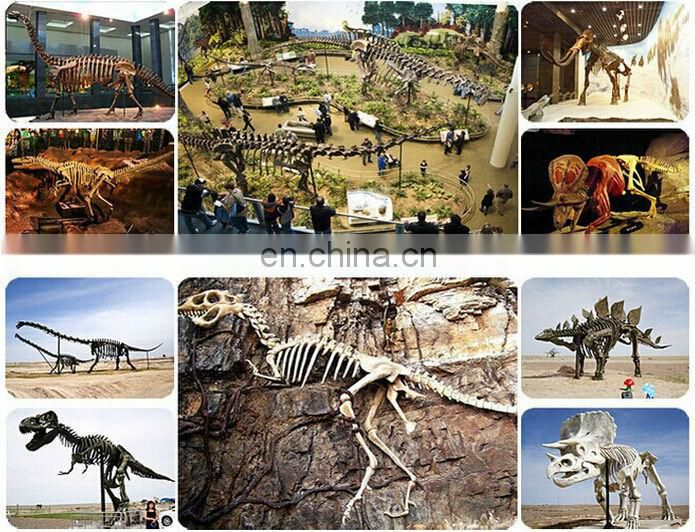2016 museum equipment-simulation dinosaur skeleton model