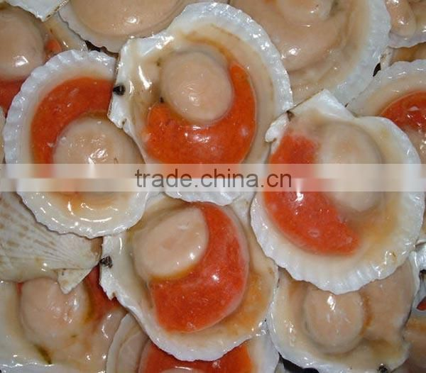 Supply scallop price of frozen half shell scallop