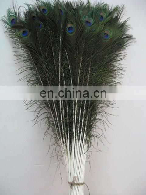 Factory directly sale wholesale top quality peacock Feathers in stock
