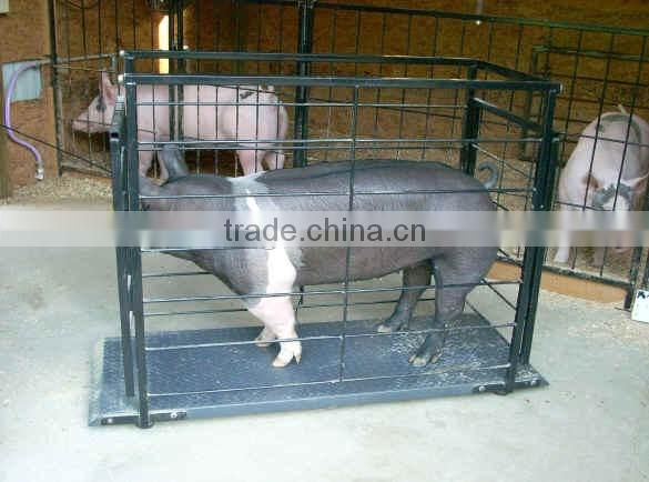 pig scale hogs scale Livestock Scale