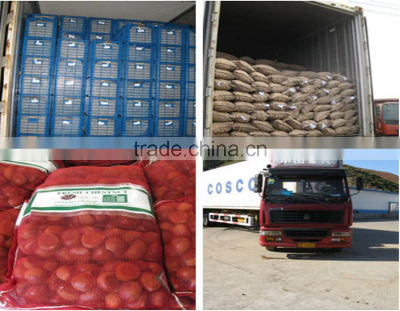 Bulk excellent Quality new fresh Dandong Chestnuts