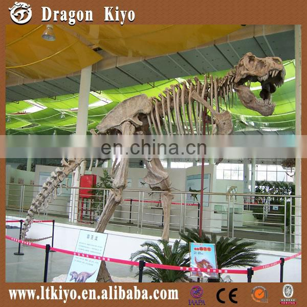 Quality fiberglass dinosaur skeleton and fossil for exhibition
