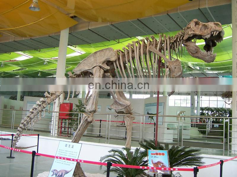 2016 life size realistic dinosaur skeleton on the wall dinosaur fossil