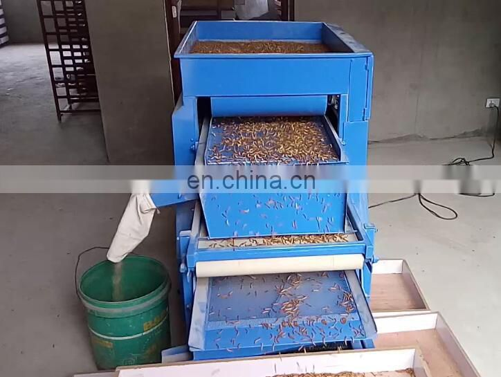 big small worms pupa. dead worms picking machine Tenebrio molitor selecting machine Mealworm Beetle sorting machine