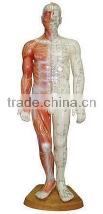 85cm acupuncture model - whole body model