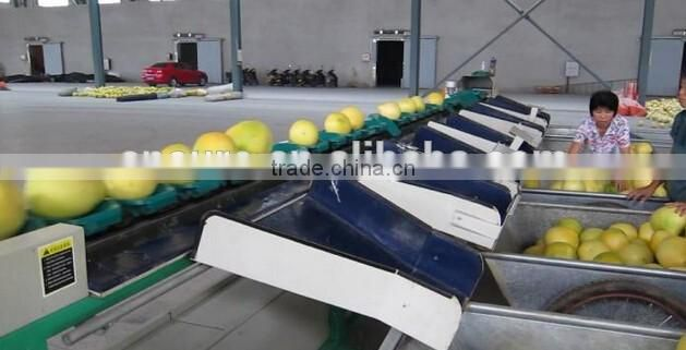 Fruit Vegetable Apple Grading Machine Sorter Grader