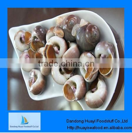 new frozen high quality moon snail low price
