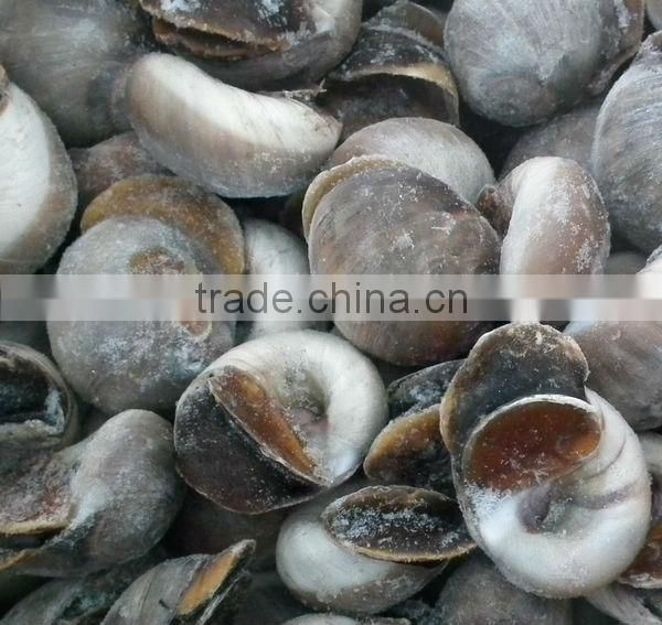Fresh frozen new season moon snail