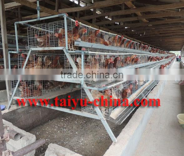 TAIYU baby chick layer hen cage from one day old to adult
