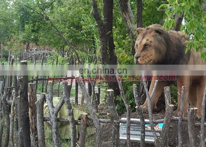 Outdoor animal theme park life size lion