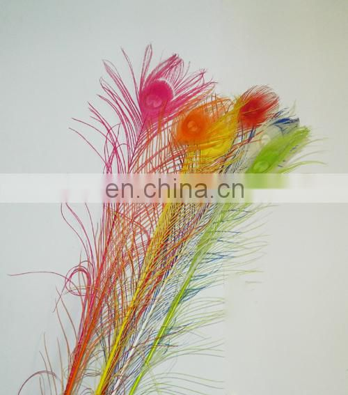 beauty natural 80cm-90cm peacock feather