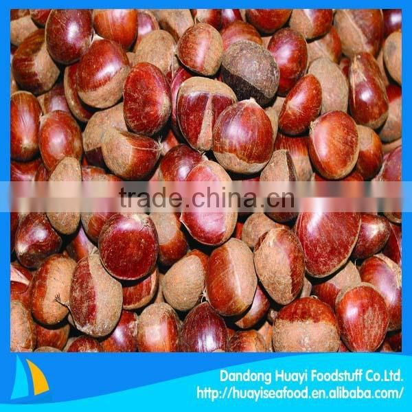 100% natural green crop raw chesnut with shell