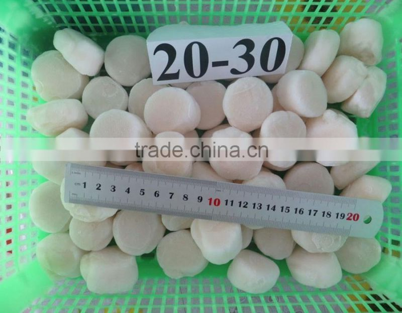 iqf frozen high quality ligament of pen shell Chinese supplier