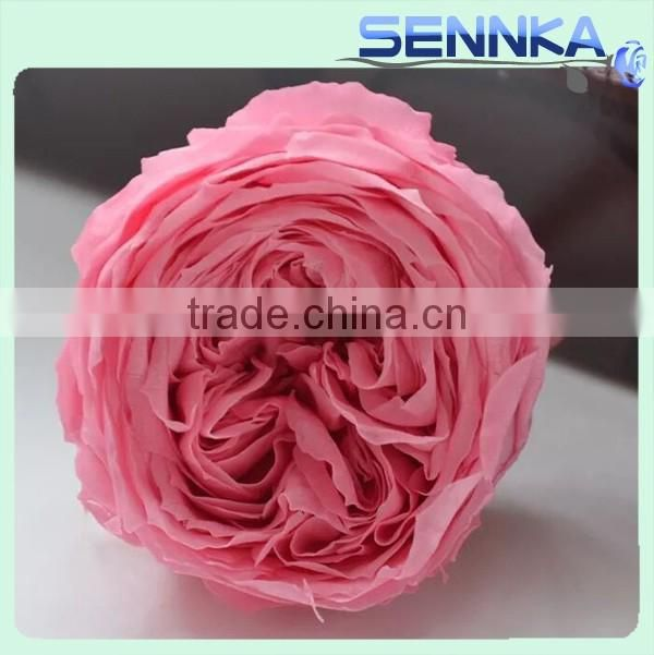 Valentine S Day Gifts Wholesale Preserved Roses Flower Austin Rose