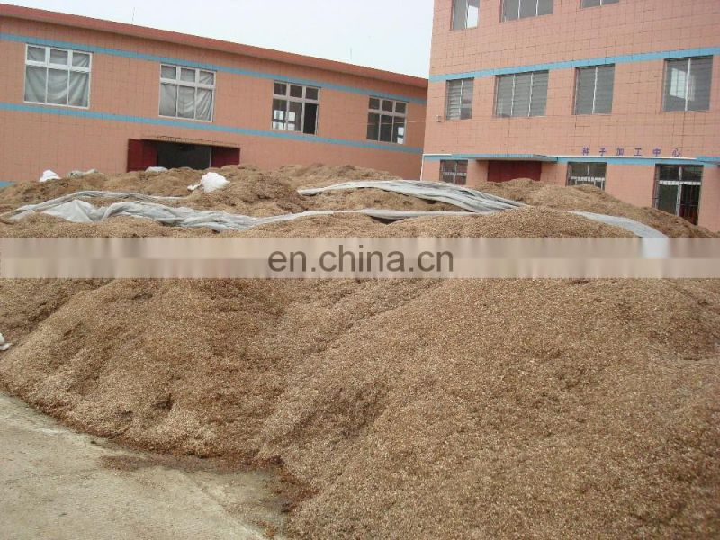 Oyster mushroom cultivation - Oyster Mushroom Bag Production Line