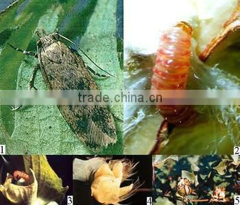 HOT Agrochemical Pesticide Insecticide Cypermethrin 95%TC 4.5%EC 10%EC 5%WP